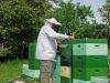Imker am Bienenstock